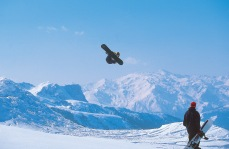Boarderweek - Snowboardevents und Contests hautnah